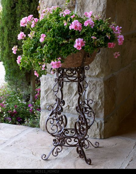 Pink Ivy geraniums and black wrought iron planter