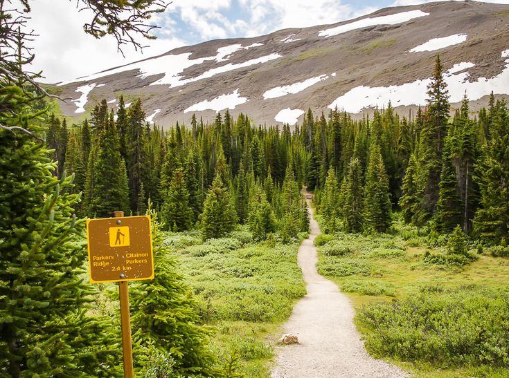 The Parker Ridge Hike on the Icefields Parkway
