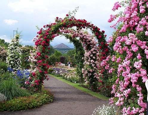 Садовая арка увитая плетистой розой - фото