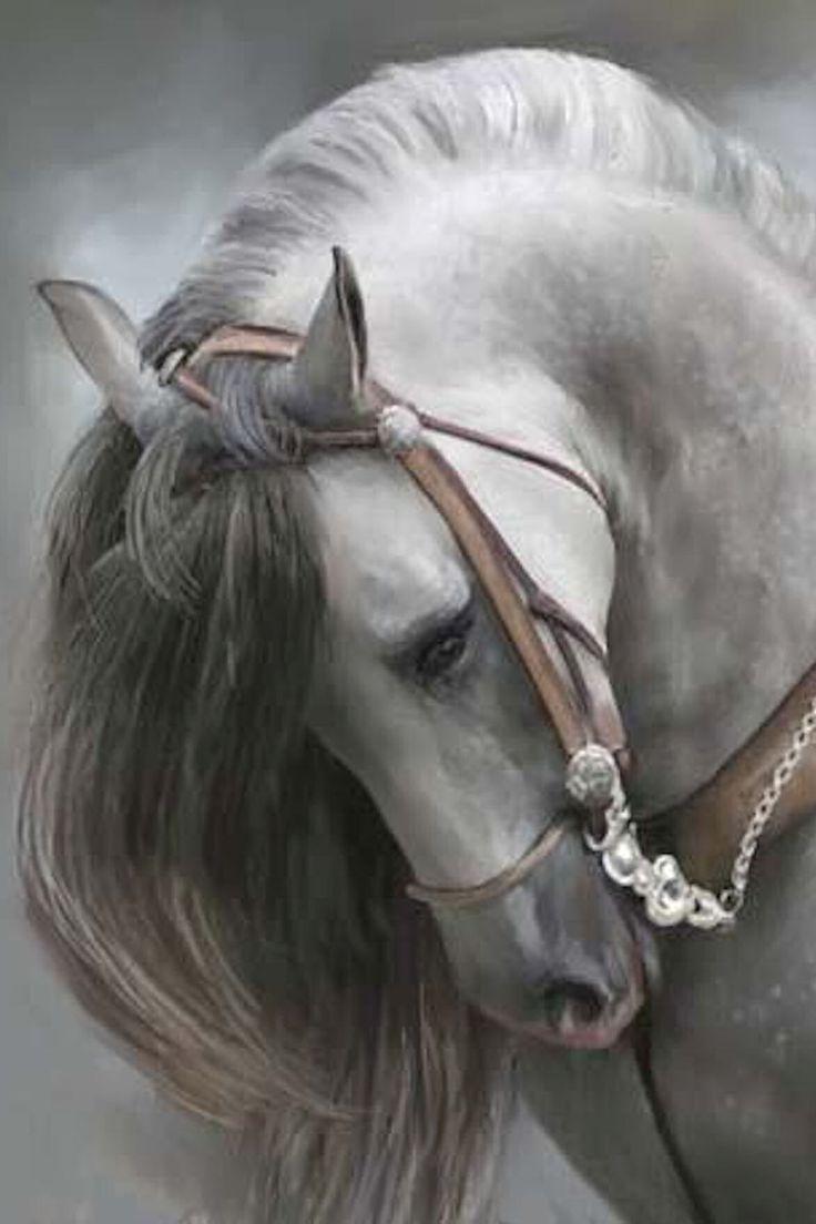 .hermoso caballo