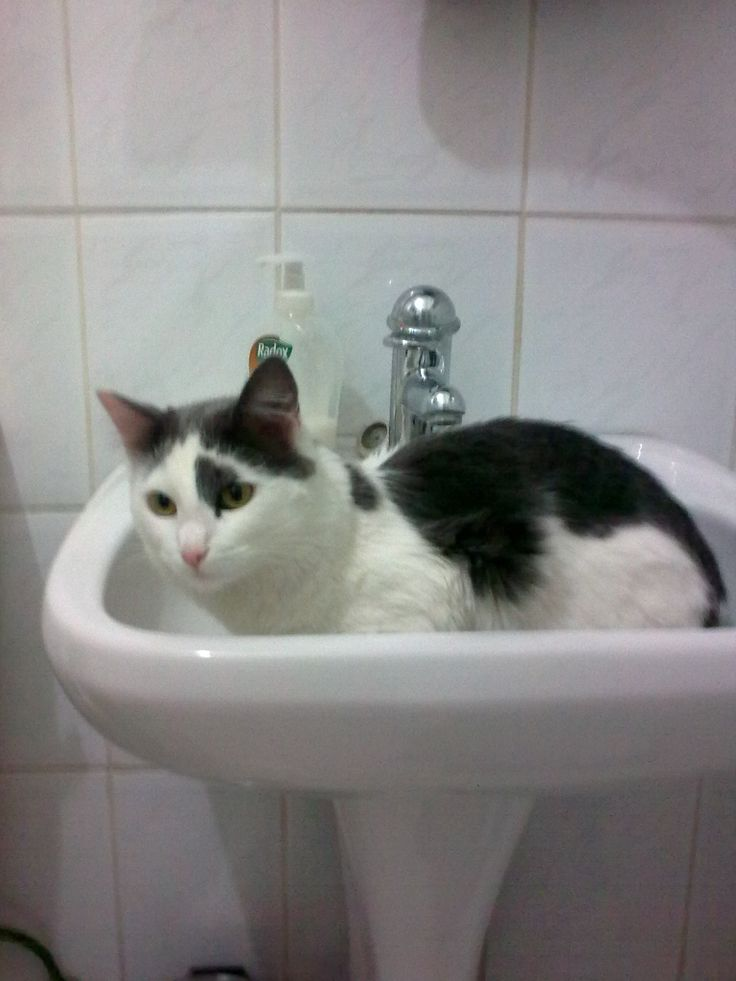 Washbasin is also utilized on a warm day