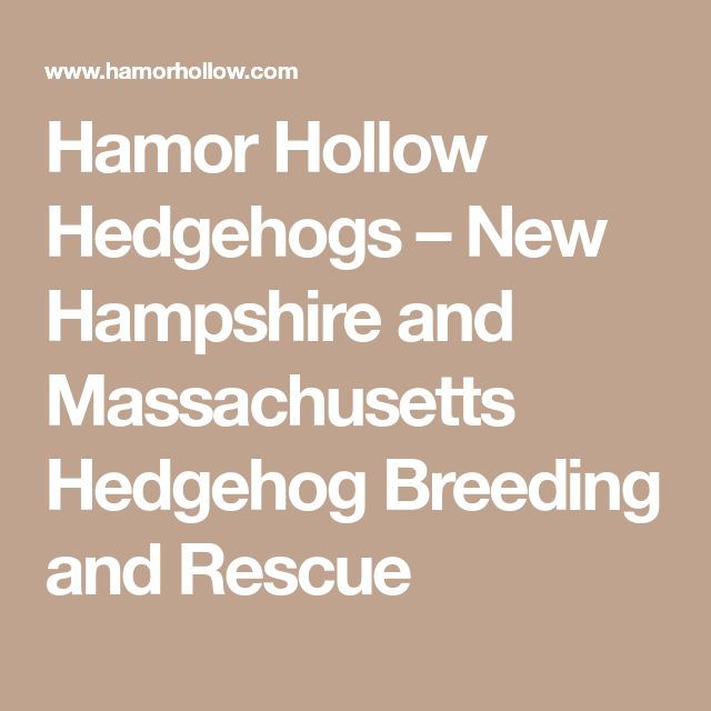 Hamor Hollow Hedgehogs – New Hampshire and Massachusetts Hedgehog Breeding and Rescue