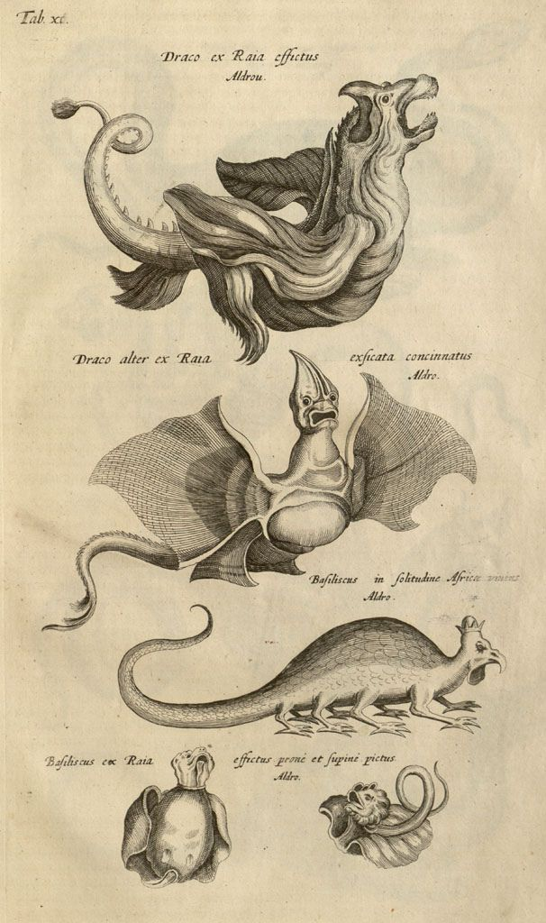 Human has created Dragons over the world. Another engraving from Historiae Naturalis de Quadrupedibus Libri, by Joannes Jonstonus (1657).