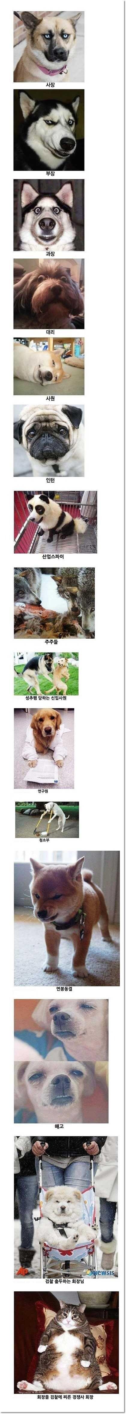 흔한 회사 조직도   Daum 루리웹