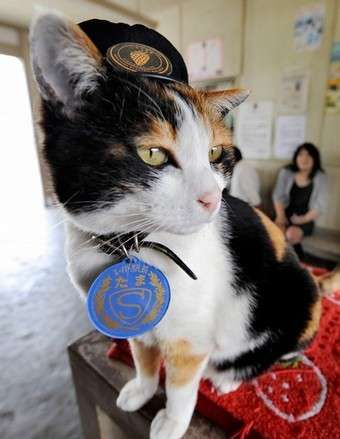 $10.6 Million Uniformed Cats - This is the feel-good feature of the day, and it's a ridiculous one. Ever since a cat named Tortoiseshell Tama was appointed the official sta...