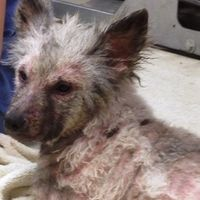 Enforce Charlemagne's Law and Free the Keeshonds from Marjorie's Kennel  http://www.change.org/petitions/gov-andrew-cuomo-enforce-charlemagne-s-law-and-free-the-keeshonds-from-marjorie-s-kennel