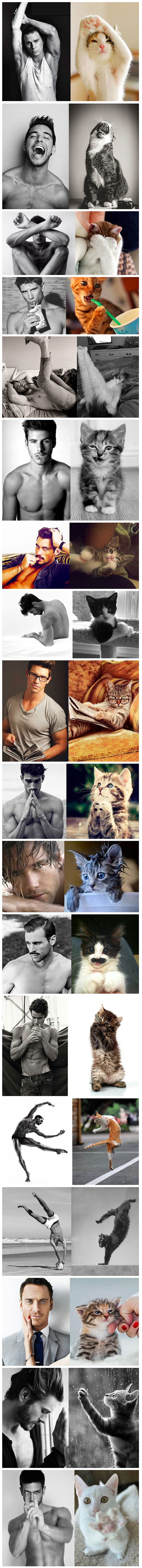 Des Hommes et Des Chatons (Men and Cats) is a single-topic blog that pairs similar photos of attractive men with pictures of adorable cats. The brilliant match-ups feature a variety of heartthrobs (including celebrities like Channing Tatum and Michael Fassbender) posing seductively alongside shots of cuddly felines striking a pose that makes the viewer question which subject they're more interested in looking at.