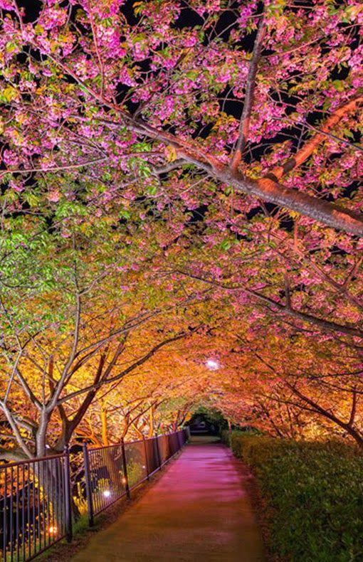 Tunnel of Love at Kawazu, Shizuoka, Japan
