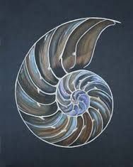 Image result for how to draw a nautilus shell