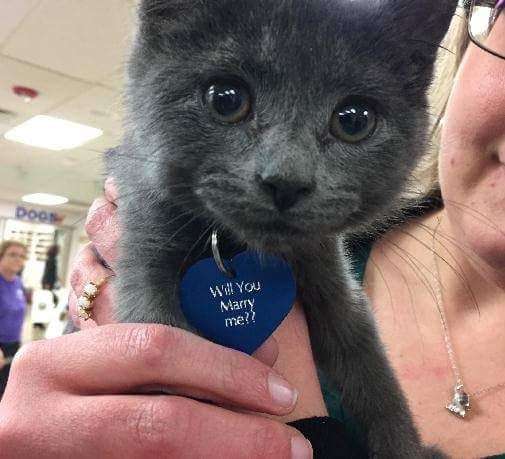 You have to see how this sweet shelter kitten helped a man propose to his girlfriend! It's pretty much the cutest video.