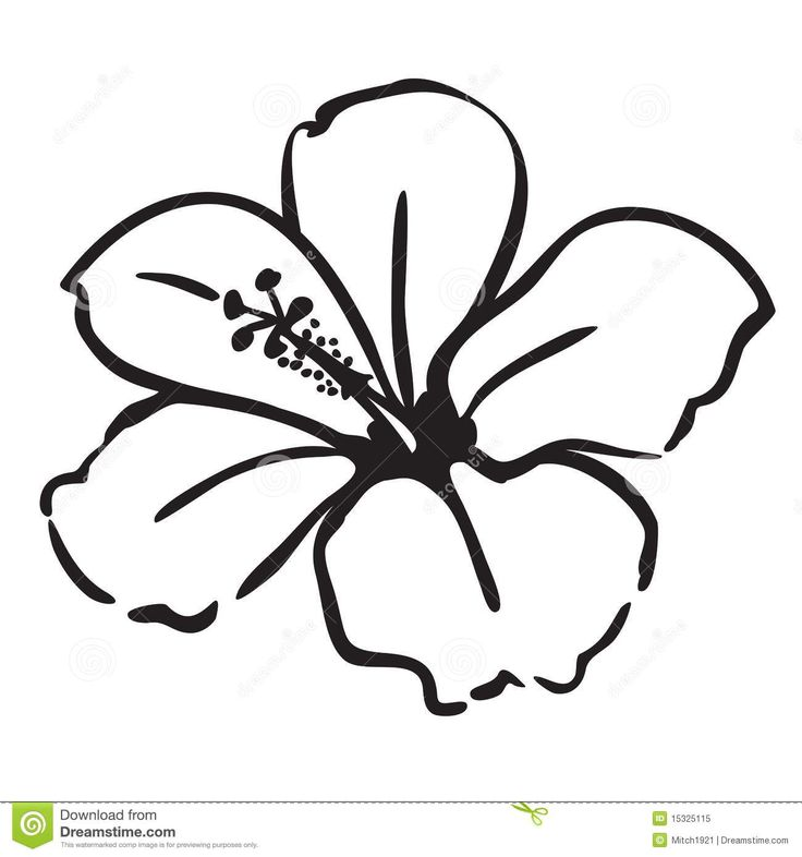 Cartoon Flower Line Drawing : Best hibiscus drawing ideas on pinterest