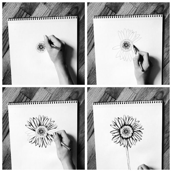 how to draw a gerbera daisy step by step