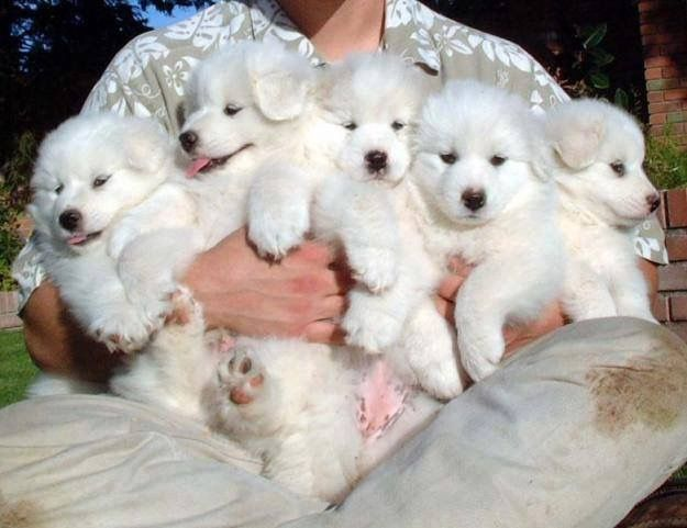 An armful of love!