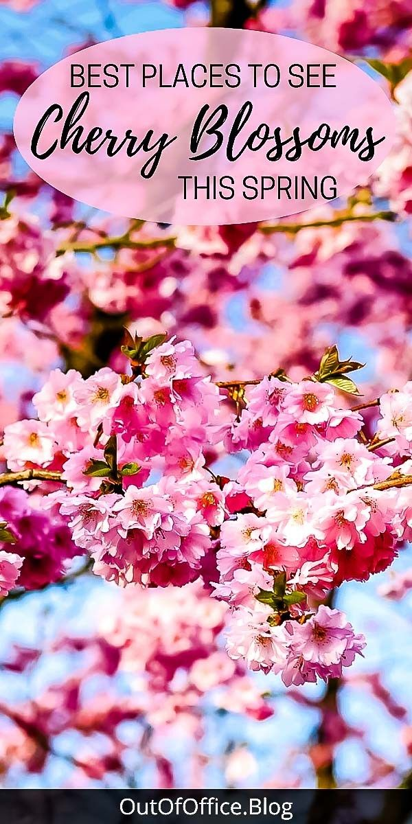Best Places To See Cherry Blossoms In The Spring In 2020 Places To See Spring Travel Destinations Spring Trip