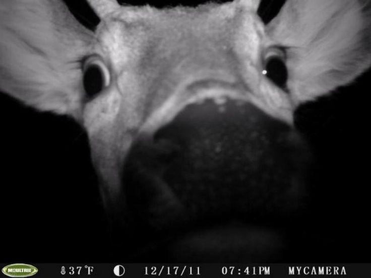 Heloo! 50 Best Trail Cam Photos | Field & Stream