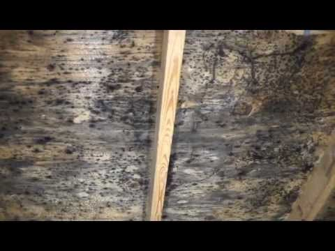 Rmr 86 Vs Leading Peroxide Solution Youtube Diy