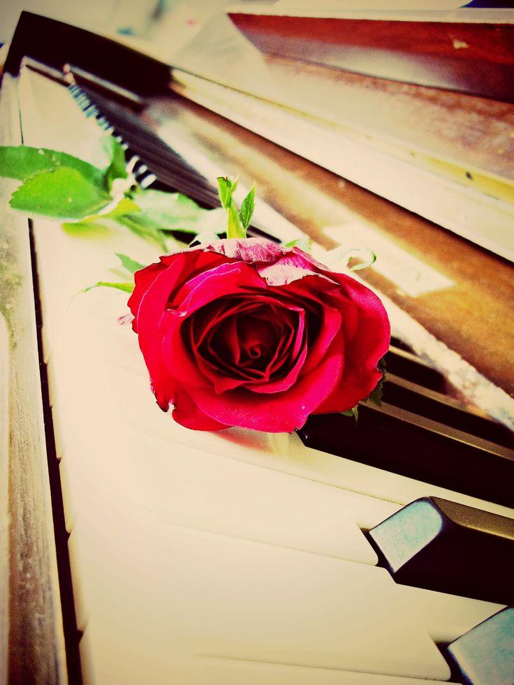 Red Rose On Piano. By Christy-Lynn Breetvelt