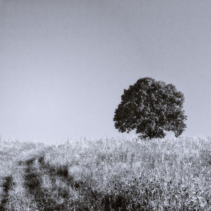 bwstock.photography  //  #tree #horizon #path