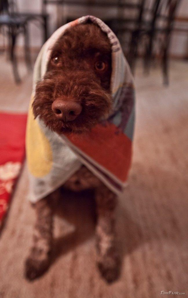 A cute little dog, called Bubu