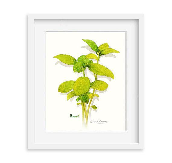 Stampa basilico, 8 X 10 erba acquerello stampa, arte della cucina, illustrazione di erba, arte per la cucina, erba culinaria opere d