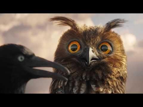 (14) Lustige Vögel auf der Stromleitung - YouTube
