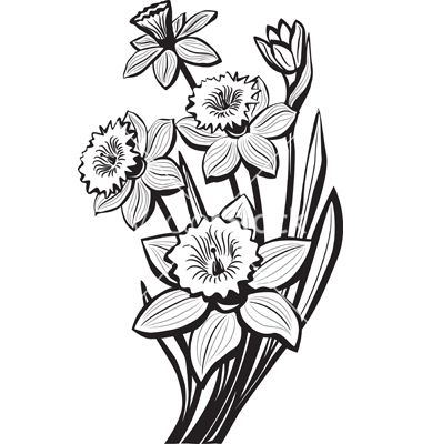 Sketch of narcissus flowers vector | Botanical | Pinterest