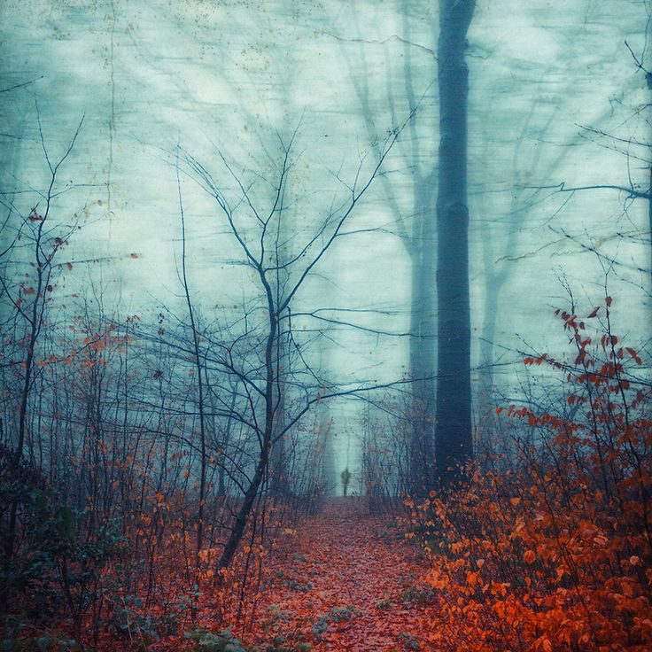 Forest path in late autumn. Texturized photograph. Prints: http://society6.com/DirkWuestenhagenImagery/equilibrium-s6b_Print