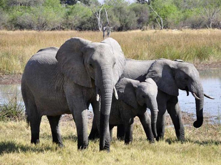 Barren Island Wildlife Sanctuary in Andaman and Nicobar