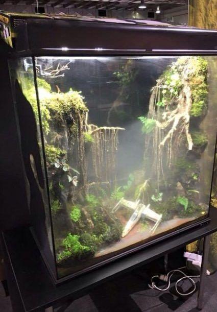 Aquarium Als Terrarium Verwenden : Ideen zu st?lle auf traumscheune