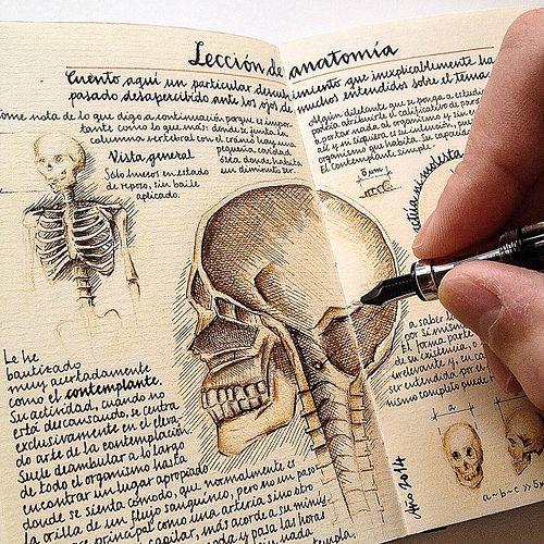 Anatomy lesson by José Naranja, via Flickr