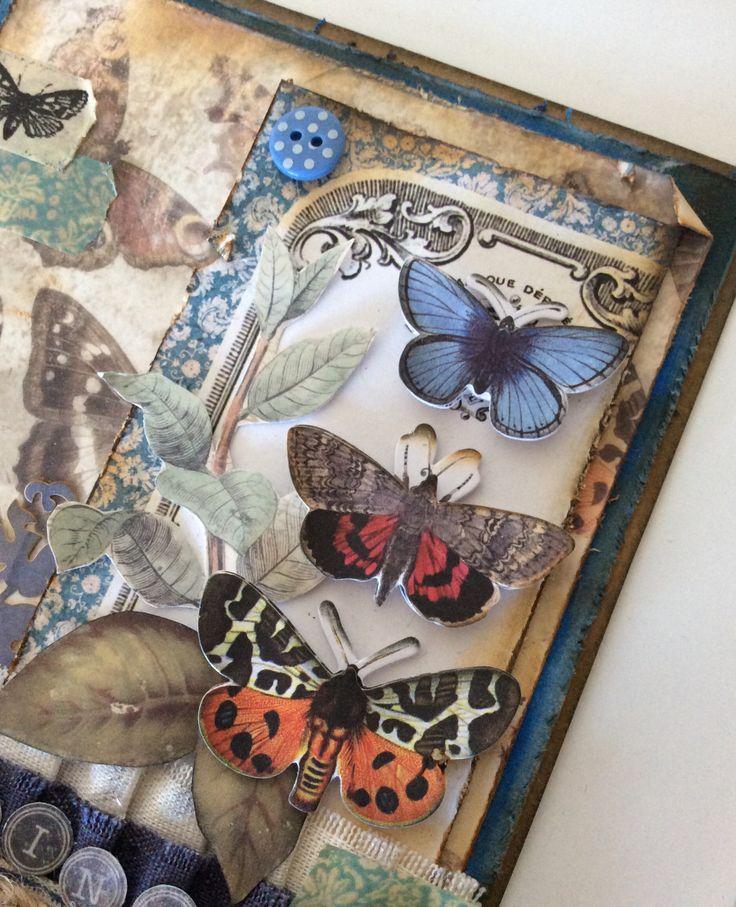 Madame Payraud - chasing butterflies close up 1