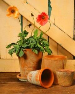 Πιθάρια & πήλινες γλάστρες | Small Things