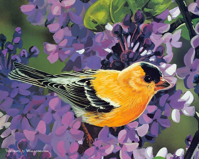 1338 best Birds Paintings images on Pinterest