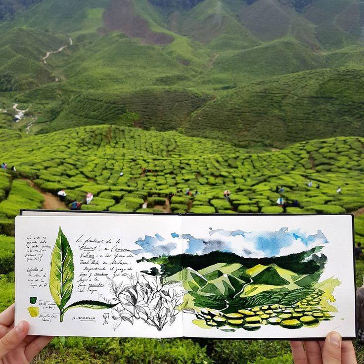 "1,860 Me gusta, 25 comentarios - Alicia Aradilla (@a.aradilla) en Instagram: ""Sketching Bharat Tea Valley in Tanah Rata, Malaysia. Incredible green geometry! #bharat…"""