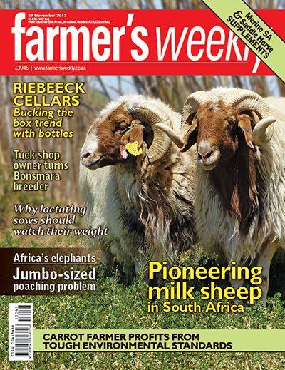 29 November 2013 - 'Pioneering milk sheep in SA'