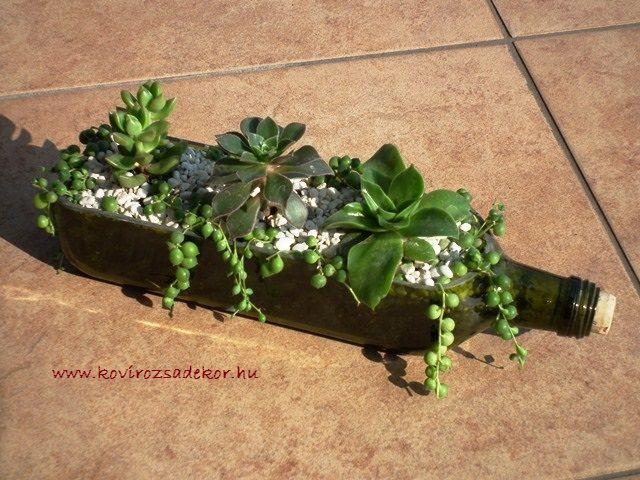 szobai pozsgások üvegben, üvegek újrahasznosítása pozsgásokkal, succulents in bottle | Kövirózsa Dekor