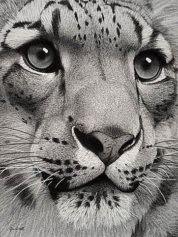 Big Cat Art B&W Photo by dark-digidestined   Photobucket