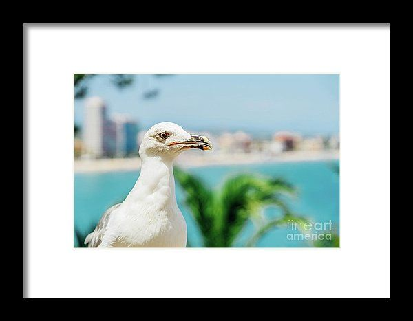 White Seagull Bird Portrait With Tropical City Skyline In Background Framed Print