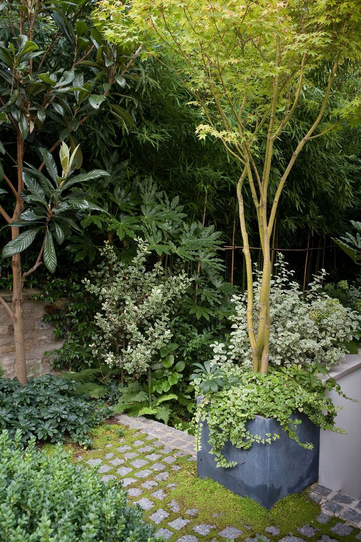 terrasse en rez de jardin paris 16 small garden pinterest gardens small gardens and. Black Bedroom Furniture Sets. Home Design Ideas