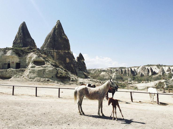 Cappadocia animals! #cappadocia #turkey #outfit #travel  #каппадокия #турция #отель #полетына воздушныхшарах