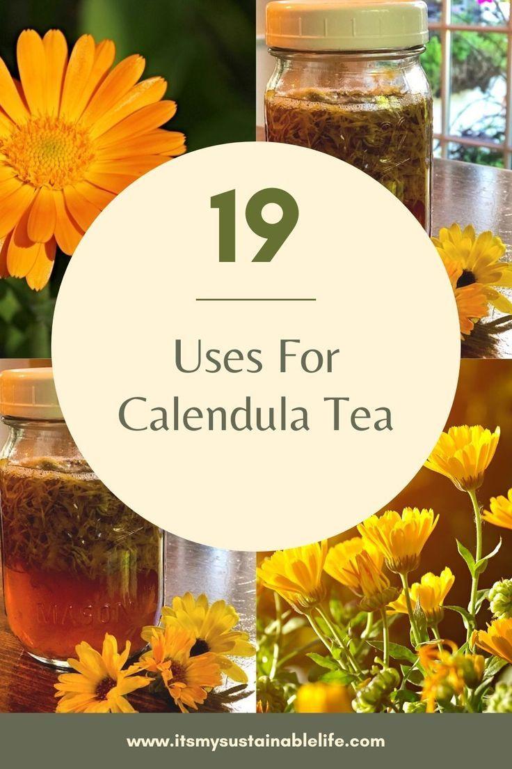 19 Uses For Calendula Tea in 2020 Calendula tea