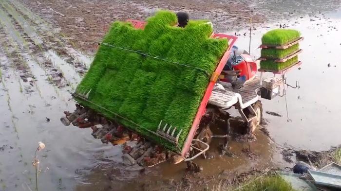 Video Unik - Wow! Ini Cara Petani Korea Tanam Padi, Kapan Ya di Indonesia Kayak Gini?