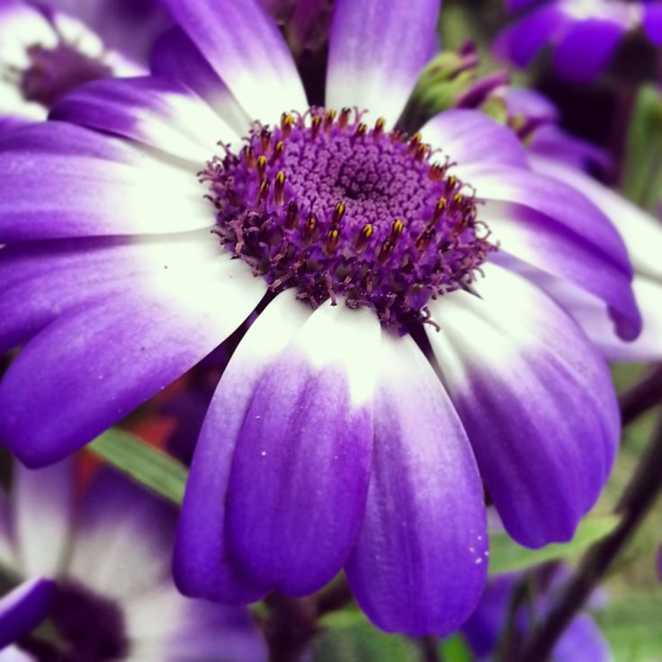 Nature in its purple...