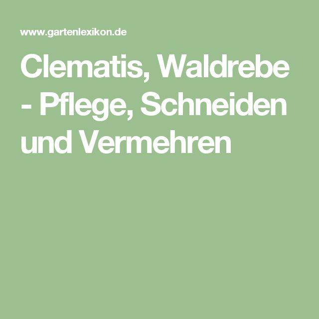 Clematis, Waldrebe - Pflege, Schneiden und Vermehren