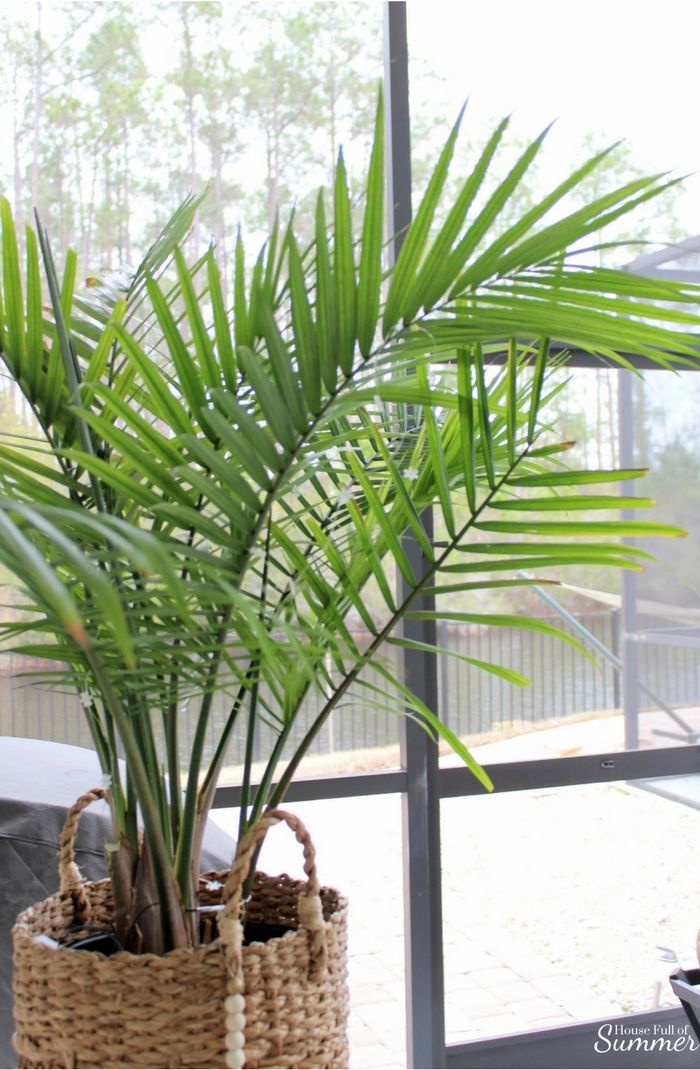 How To Care For An Indoor Majesty Palm Indoor Palm Trees
