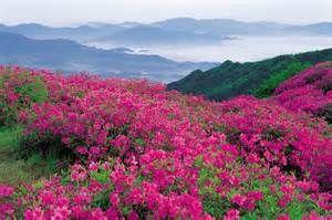 wildflowers__blue_ridge_parkway__north_carolina.jpg