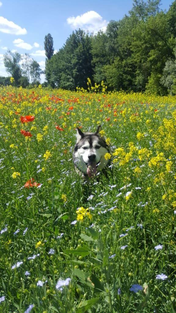 Hunde Foto: Simone und Obama - Blumenjunge Hier Dein Bild hochladen: http://ichliebehunde.com/hund-des-tages  #hund #hunde #hundebild #hundebilder #dog #dogs #dogfun  #dogpic #dogpictures