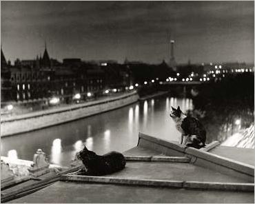 Les chats de la nuit, Paris, Robert DOISNEAU