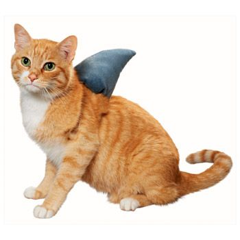 Fabulous 25 Best Ideas About Halloween Costumes For Cats On Pinterest Hairstyles For Women Draintrainus
