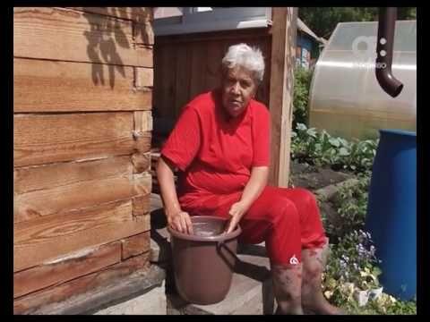 Голова садовая. Как сделать яичную подкормку